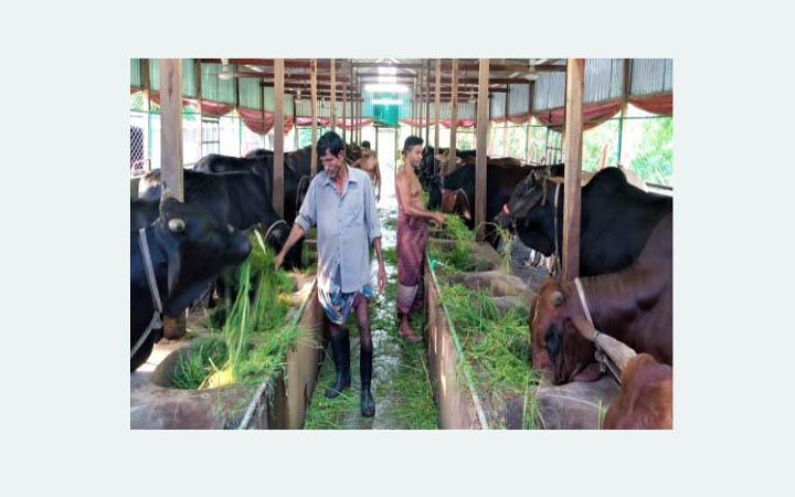 পাবনার তিন উপজেলার সাড়ে সাত হাজার খামারিরা দুশ্চিন্তায়